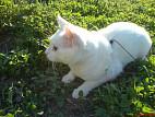 Как обезболить кота при панкреатите thumbnail
