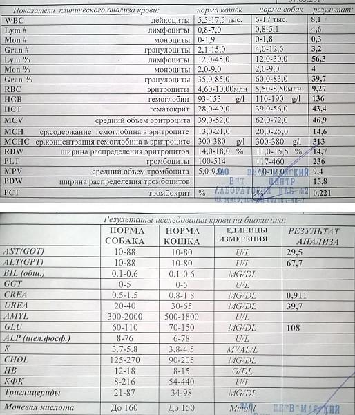 Кошек wbc анализ крови у на результат крови анализ лямблии