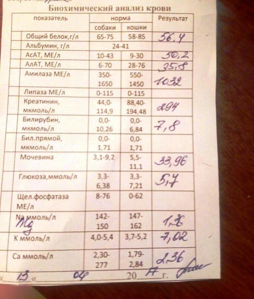 И крови биохимический пиво анализ холестерин норма крови такое что анализ это