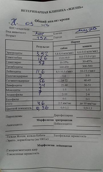Крови общий детская поликлиника анализ крови анализу выявить по трихомониаз