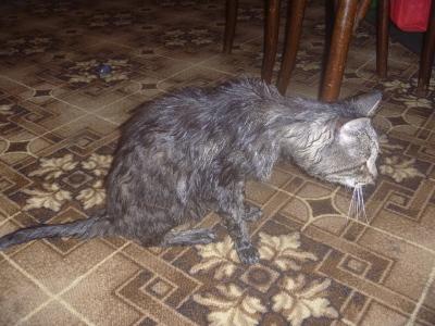 Кошка сильно похудела но ест хорошо