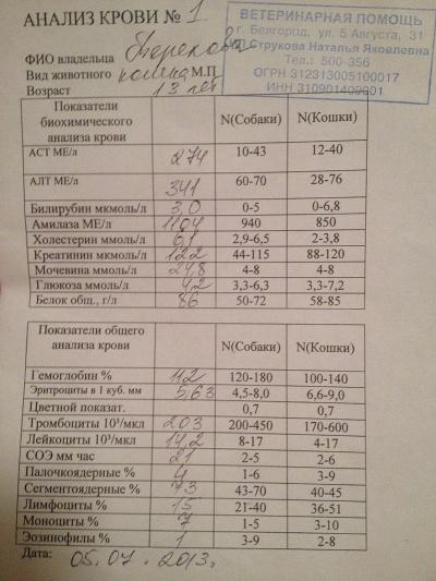 Кошки анализ рак крови на мало анализ лимфоцитов крови